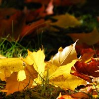 colours of autumn V by Wilithin