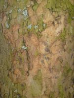 tree bark 2 by Time84