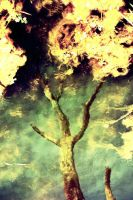 TreeInWater by ambie-bambi