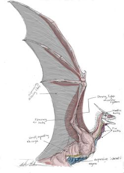Dragon Wing and Chest Anatomy by Ashere