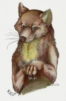 Marten by Grion