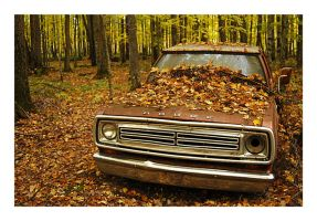 Dodge in the Woods by jazzkidd