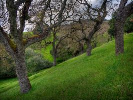 Oaks HDR by themobius