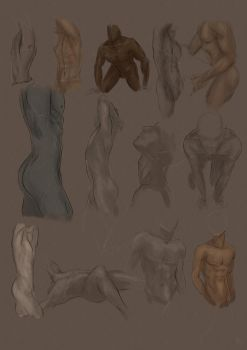 Male body study by Lady-Lillika