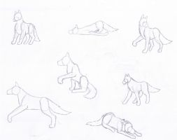 Wolf Poses by malanth