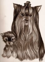 Yorkies by remmysbane
