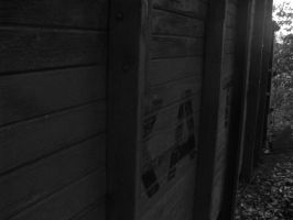 What Hides in the Woods: B+W by en-visioned