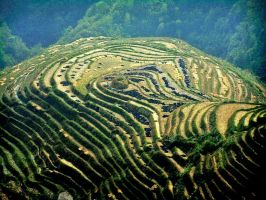Green  Terraces 1 China by CitizenFresh