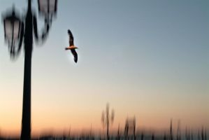 I want to fly 4 by Giampictures
