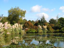 Lily pond 2 by Ommadawn