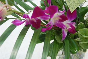 Stock 382 - Orchid by pink-stock