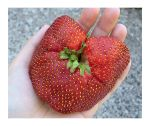 Giant Mutant Strawberry Heart by ScarletWarmth