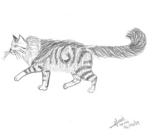 .:~ Gossip Coco's Art ~:. Maine_coon_drawing_by_gossipCoco