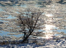 ice on the river by Dieffi