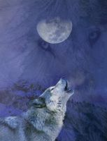 Fullmoon by Wolverica