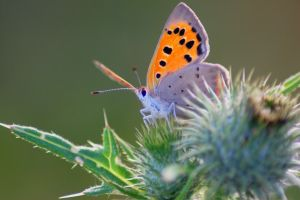 The Thistle and the Butterfly by 1Mathew7