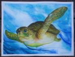 Tortuga by 24Autumnights