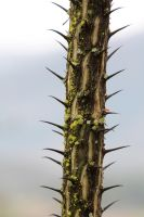 Moss and Spikes II by amm081