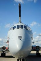 Nosey Nimrod by in-my-viewfinder