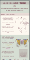 Anatomy Tutorial- Collar Bone by JillLenaD