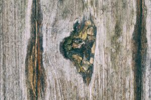 Wood wound by nav1dn91