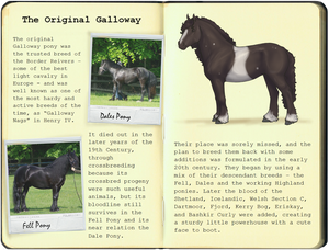 New Galloway Pony Breedbook, 1 - Origins by WhiteLionsOrchard