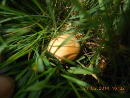 Fairy Ring mushroom 2 by WolfDemonG
