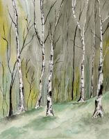 Birches Before Spring by aragonia