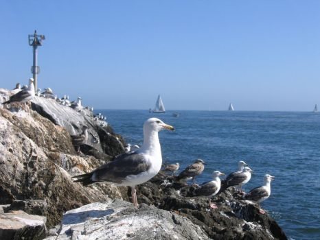 Newport Seagulls by thewallpostings