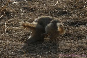Gopher Fight II by Kaptive8