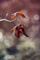 Leafs by Justine1985