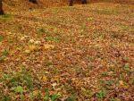 Fallen Leaves by UnTalanted