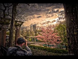 Central park Zoo by Tomoji-ized