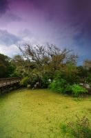 The Yellow Swamp by Enkased