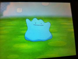 Shiny ditto for trade by LillyKratos
