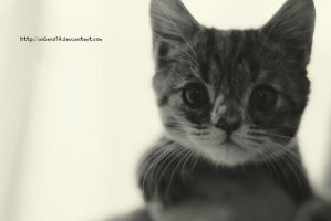 Kittie by voland14