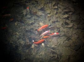 Fishies in a...POND by Zane-The-Mudfish