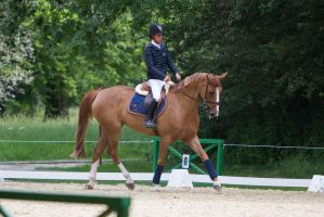 Chestnut Horse Warmup for ShowJumping by LuDa-Stock