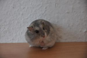 My little hamster , Monty :) by Tomahawked