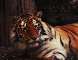 Solace In Stripes by KovoWolf