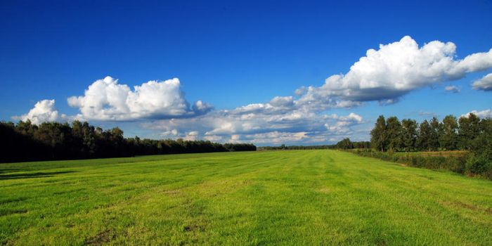 blue and green by augenweide
