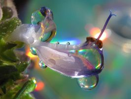 Lights And Colours by Piombo