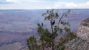 Grand Canyon III by anarchist-dream