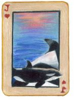 Jack of Hearts: Orca Calf by KefiraDalila