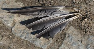Feathers of a dead bird by Amaries-stock