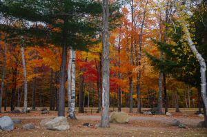 White Mountains  Fall Foliage  027 by FairieGoodMother