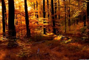 An impression of autumn by JoInnovate