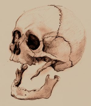 Skull 2 by Picarus
