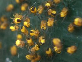 Spiderlings 2 by ChaoticatCreations