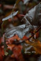Leaves 17 by Risandell